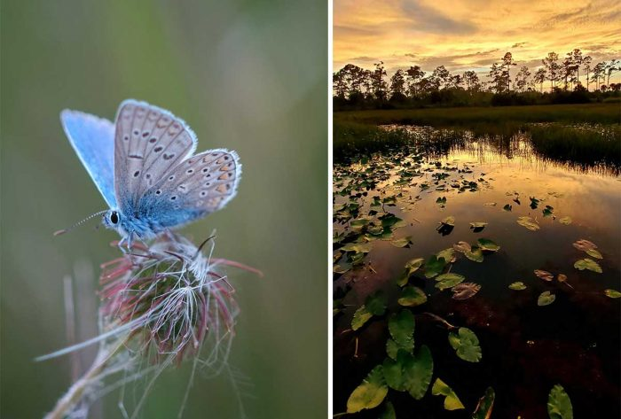 Best Photos Sent To Us This Week (12 September 2021)