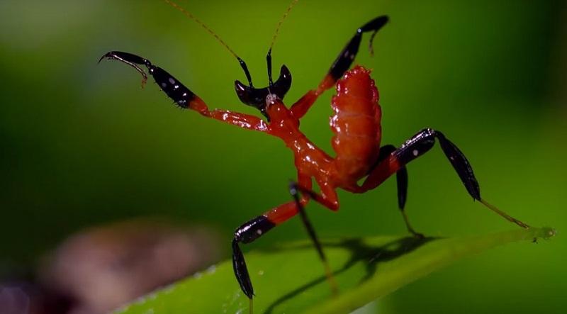 Jumping Spider Vs Kung Fu Mantis
