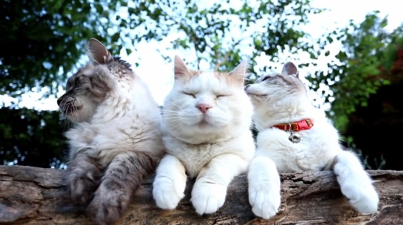 Beautiful Cats Relaxing in Nature