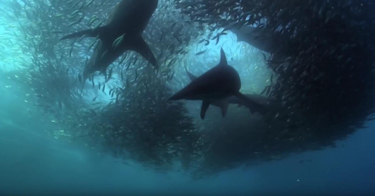 Underwater Armageddon