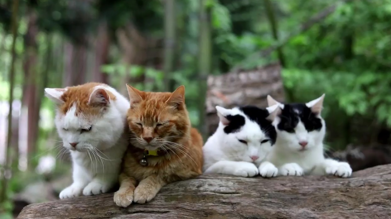 Cats Relax In Forest