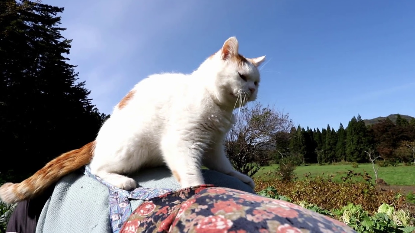 Cat Supurrvising The Farmer