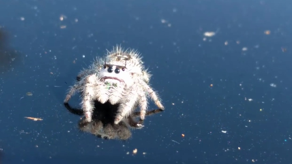 A Cute Friendly Spider