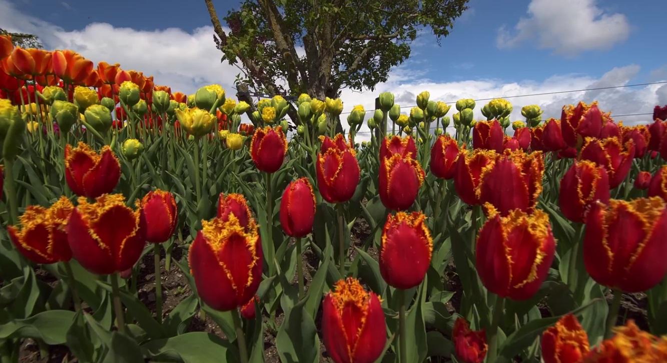 Beautiful Flowers Relaxing Video