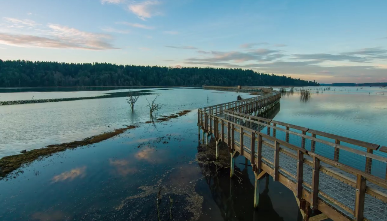 Moments Of Tranquility By Nisqually River