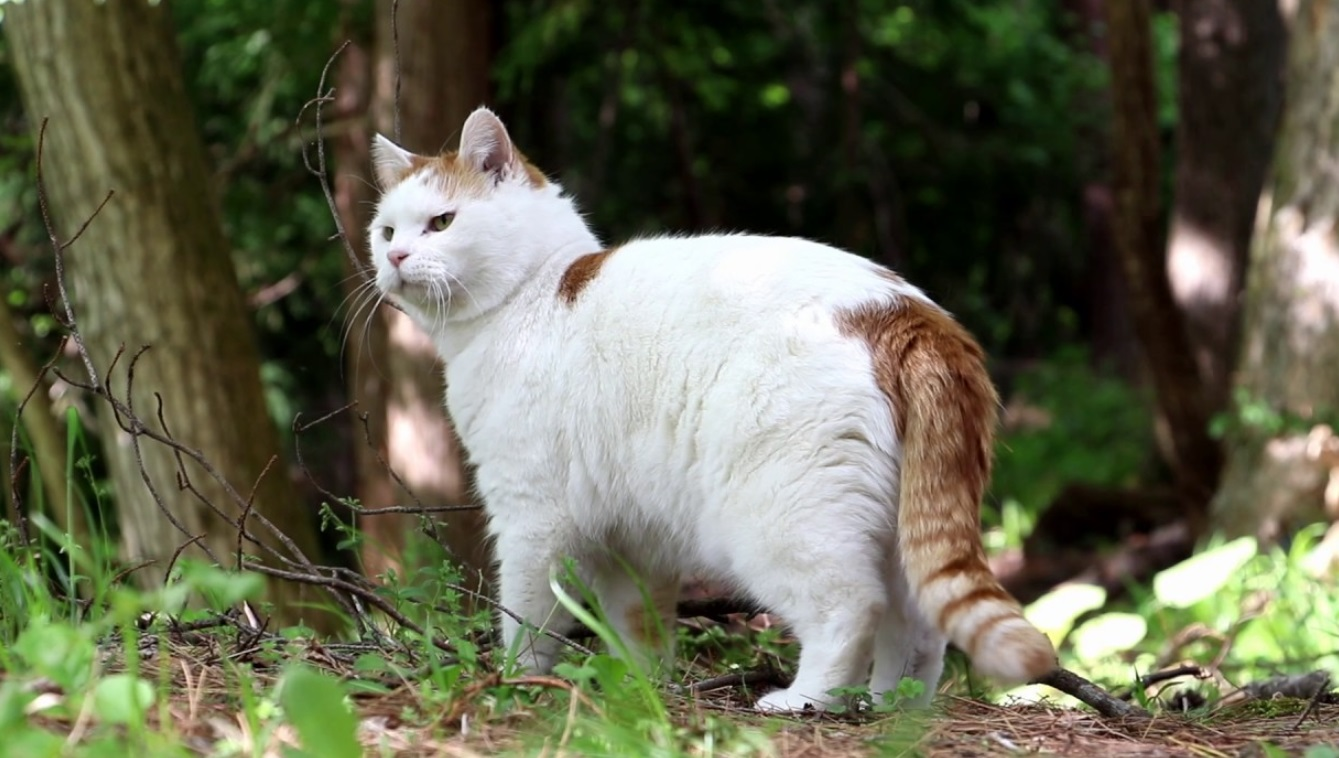 Cat Goes For Walk In Forest