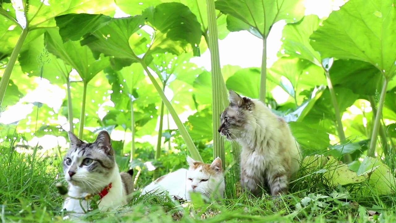 Cats Relax Outdoor