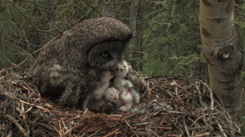 Beautiful Owl Family