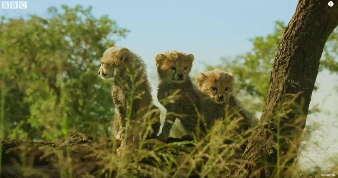 Serengeti: Trailer