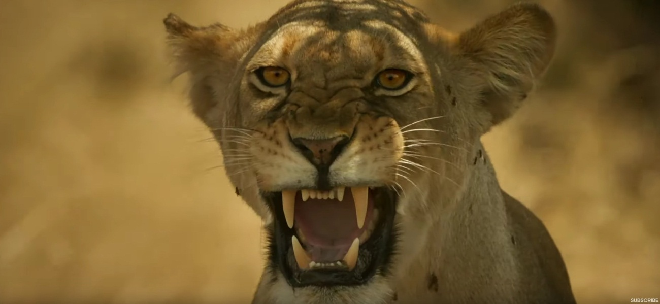 Lioness Defending Cubs From Wild Dogs
