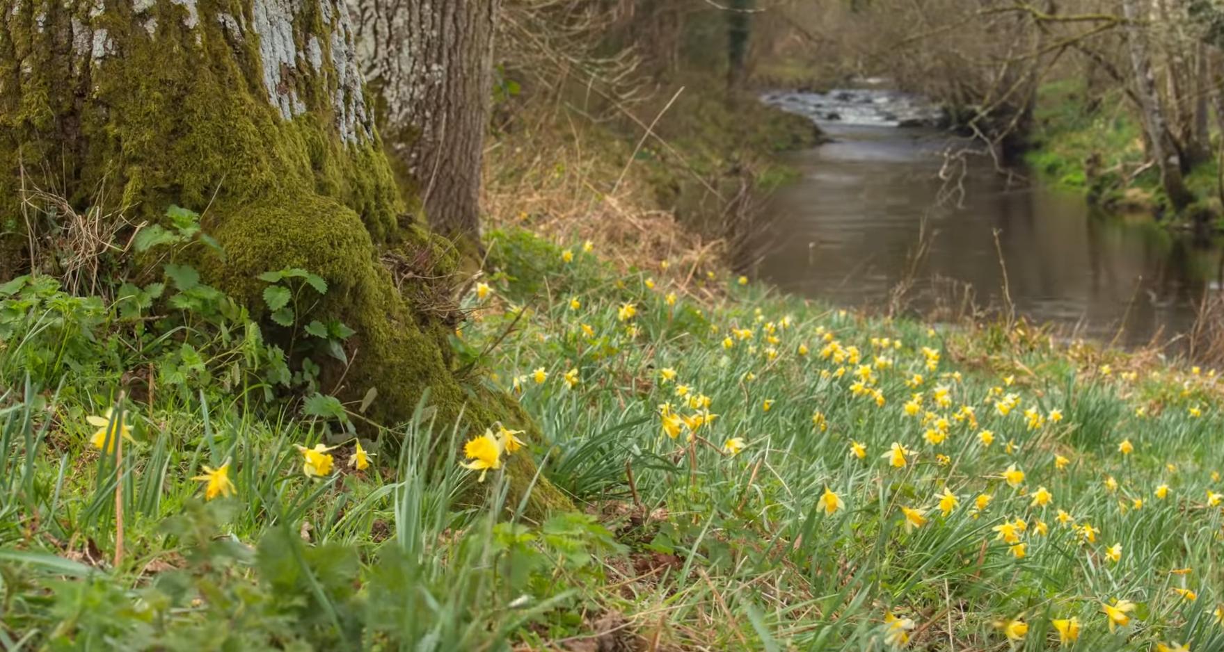 Fingle Woods Spring Timelapse