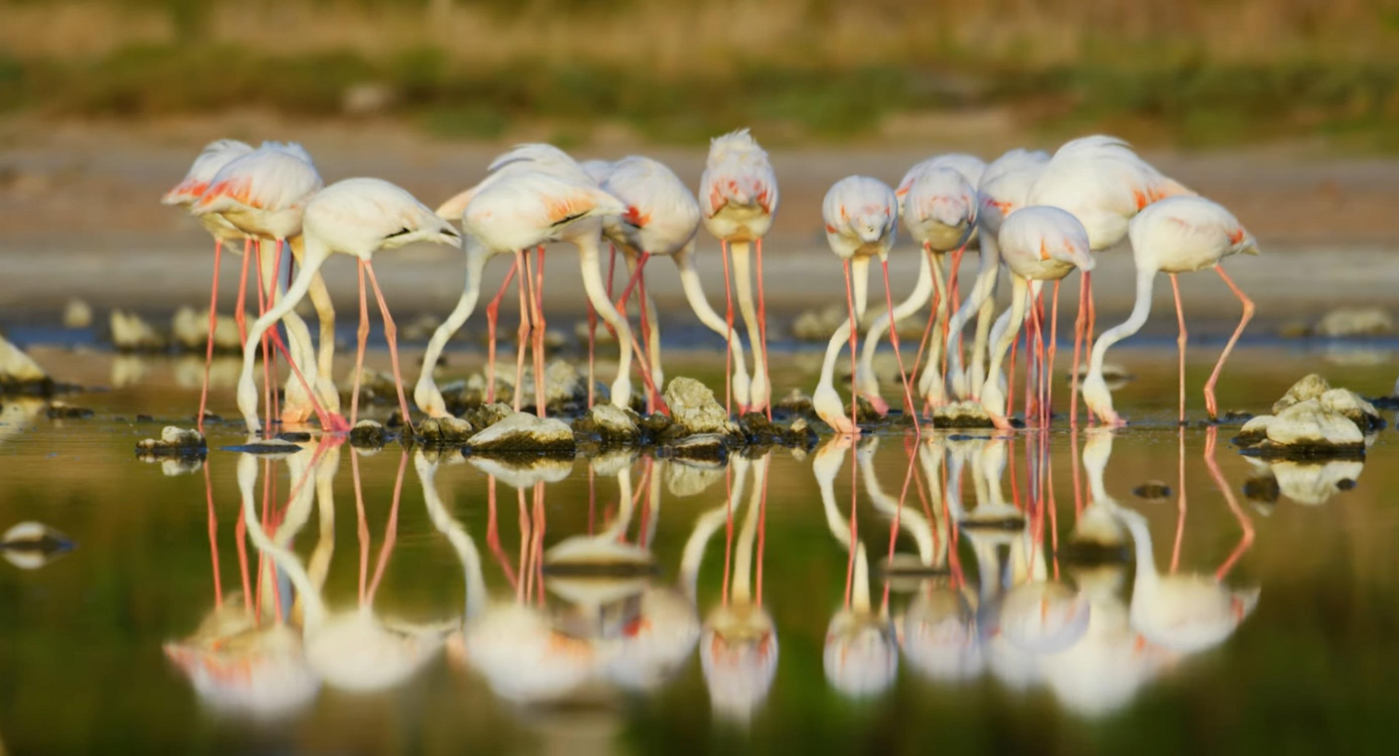 African Birds of Vermont Salt Pan