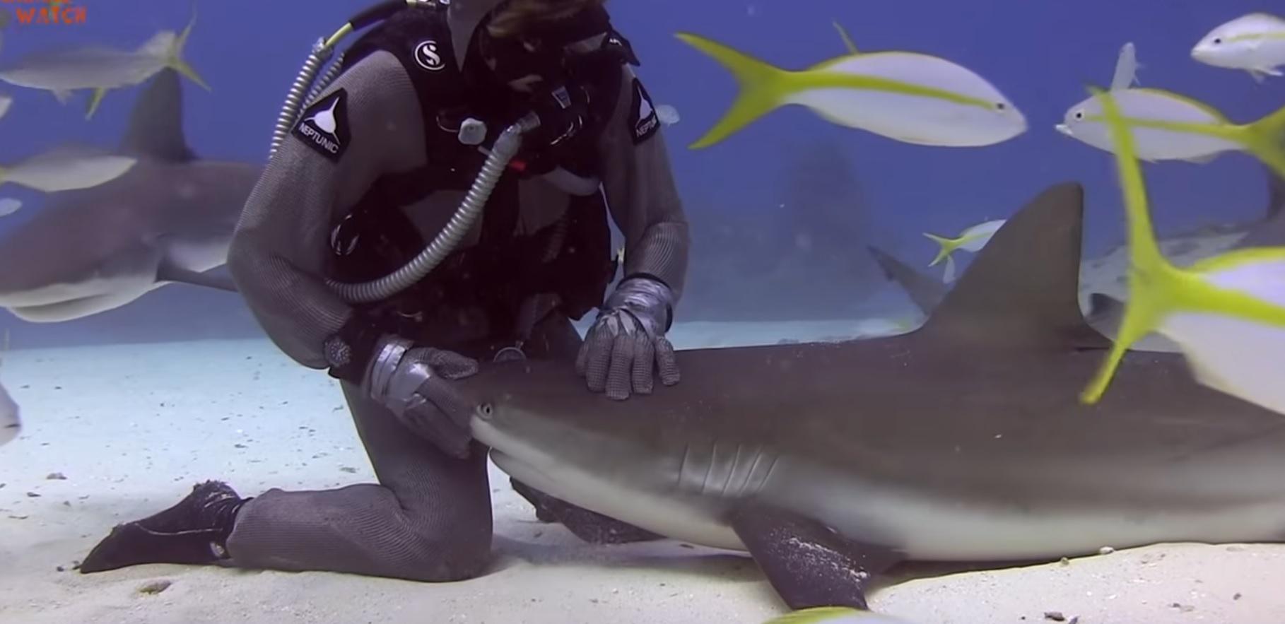 Sharks - Killers or Misunderstood