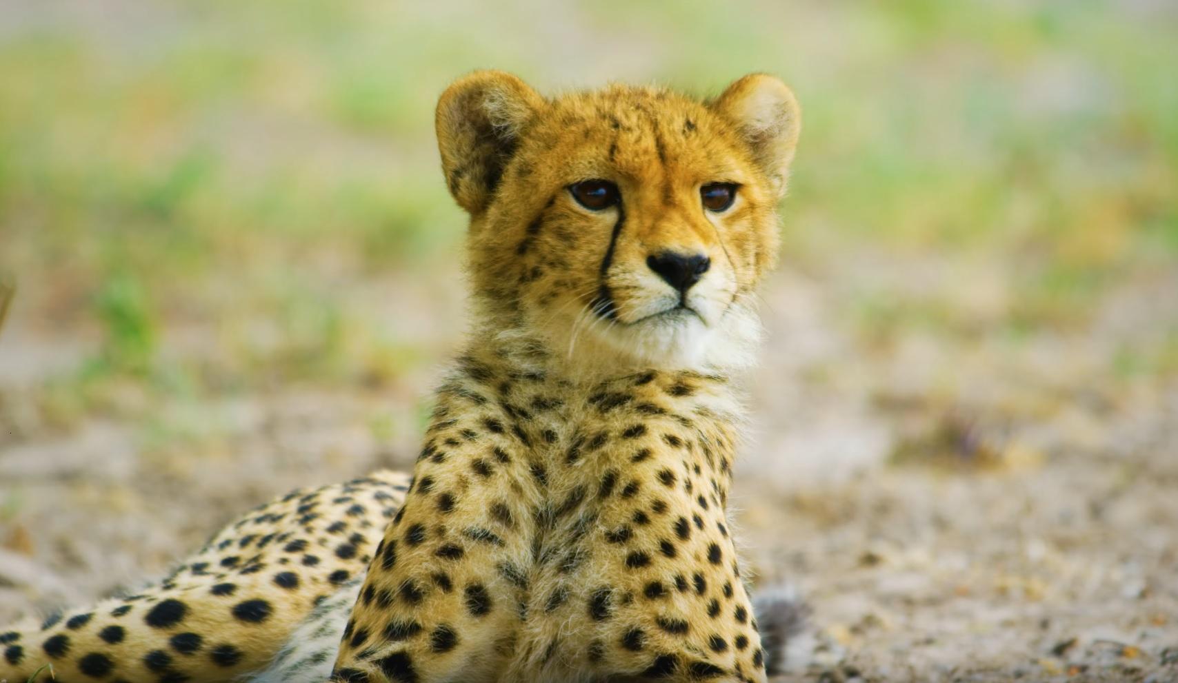 Botswana Wild Life