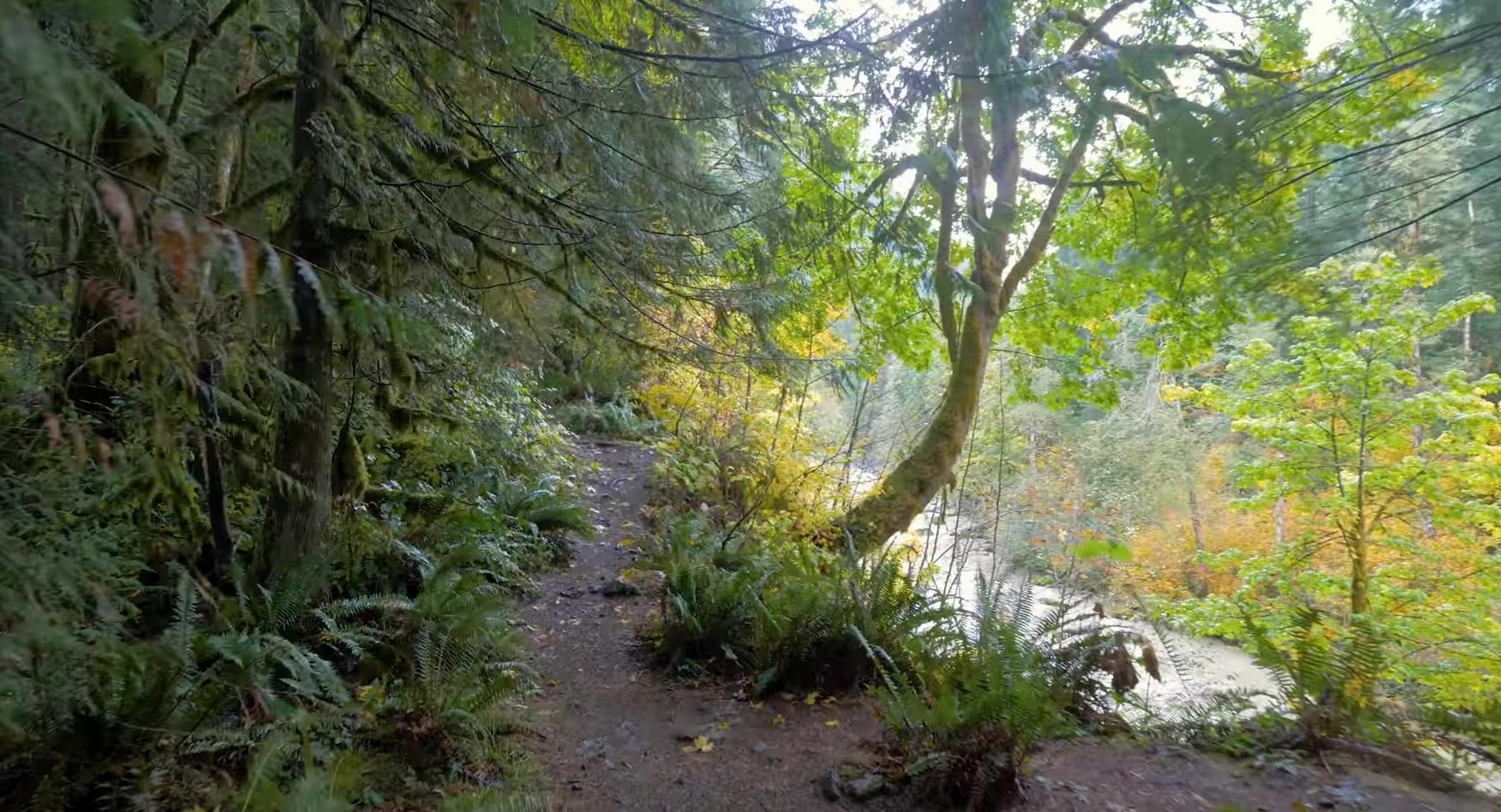 Relaxing Trail Walk In Autumn