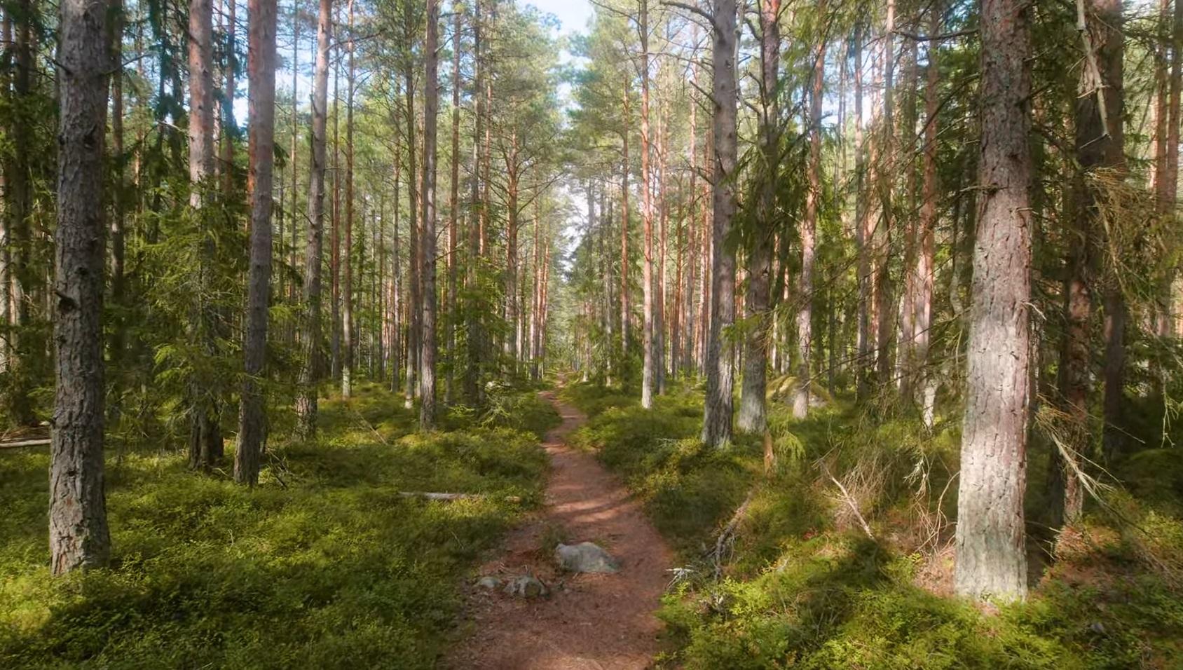 Estonia Trail And Forest Walk