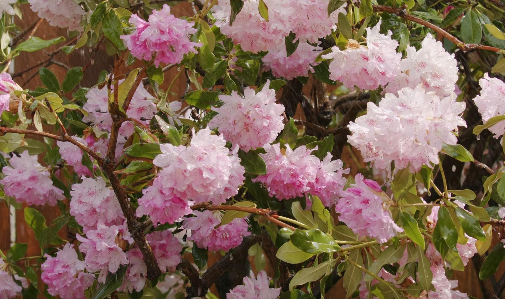 Watering Backyard Flowers