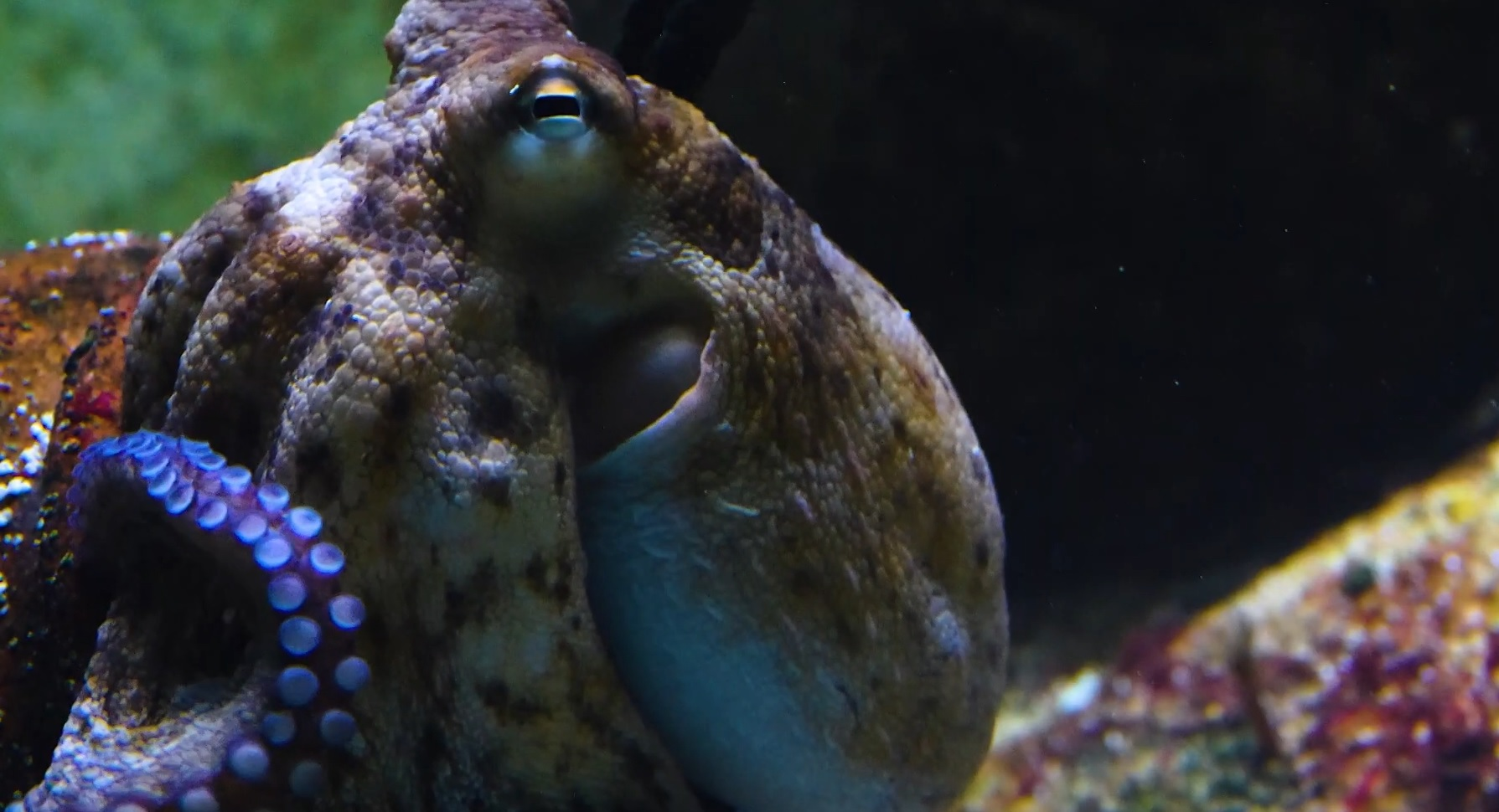 The Facinating Biology Of The Octopus