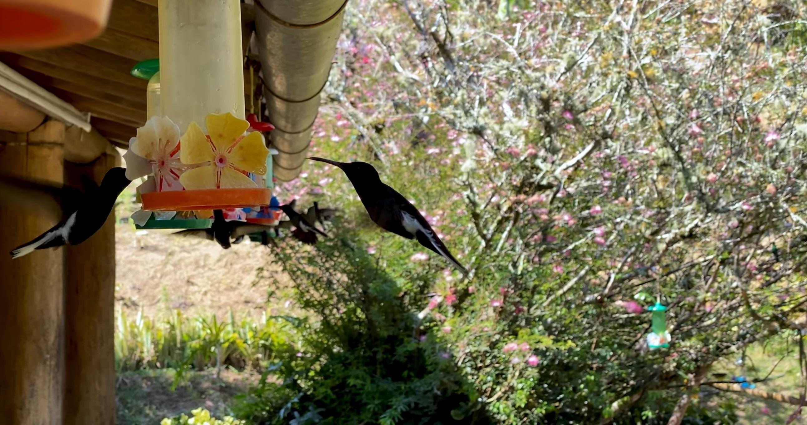 Hummingbirds Swarm Feeder