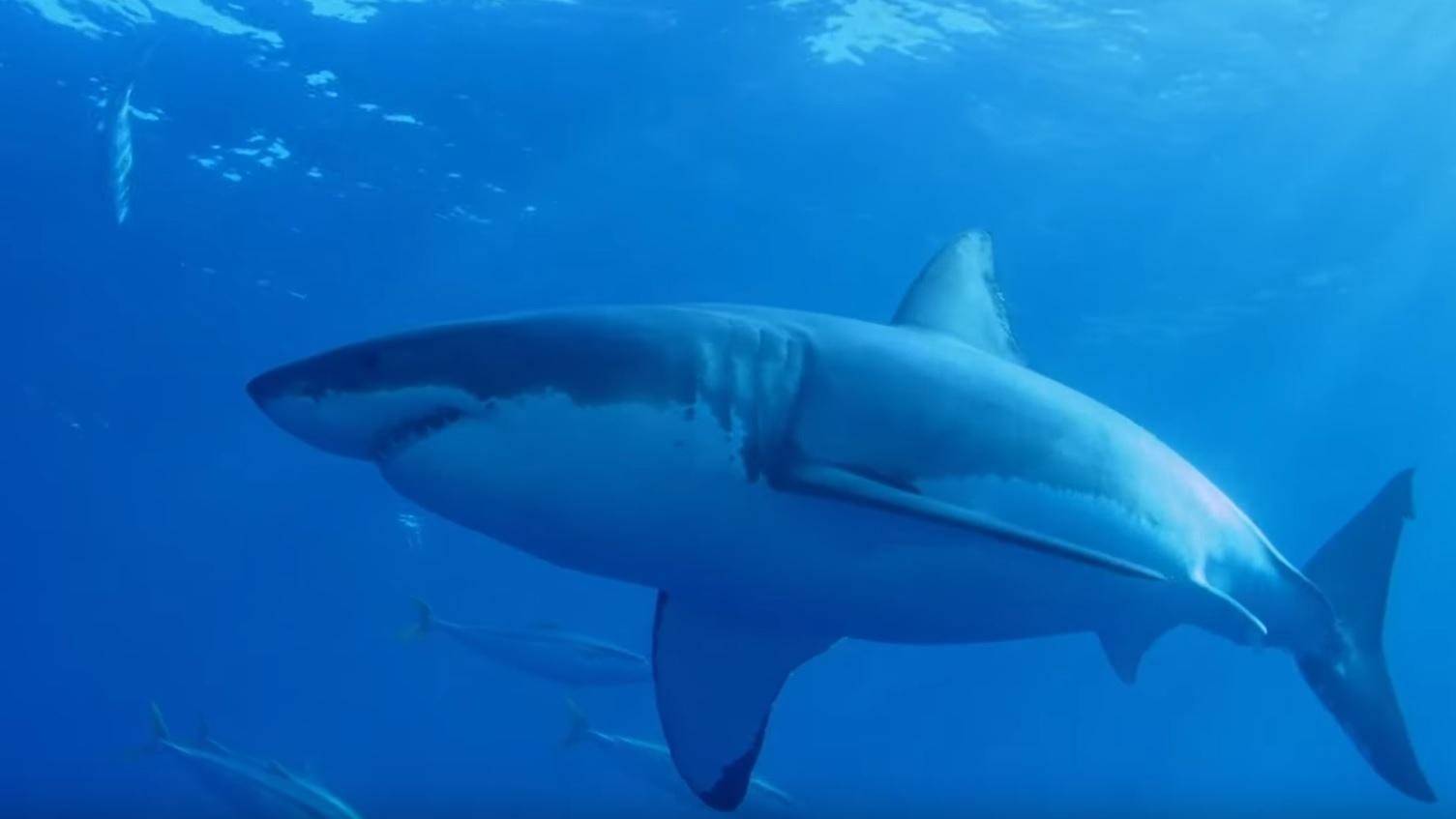 Why Sharks Are Apex Predators