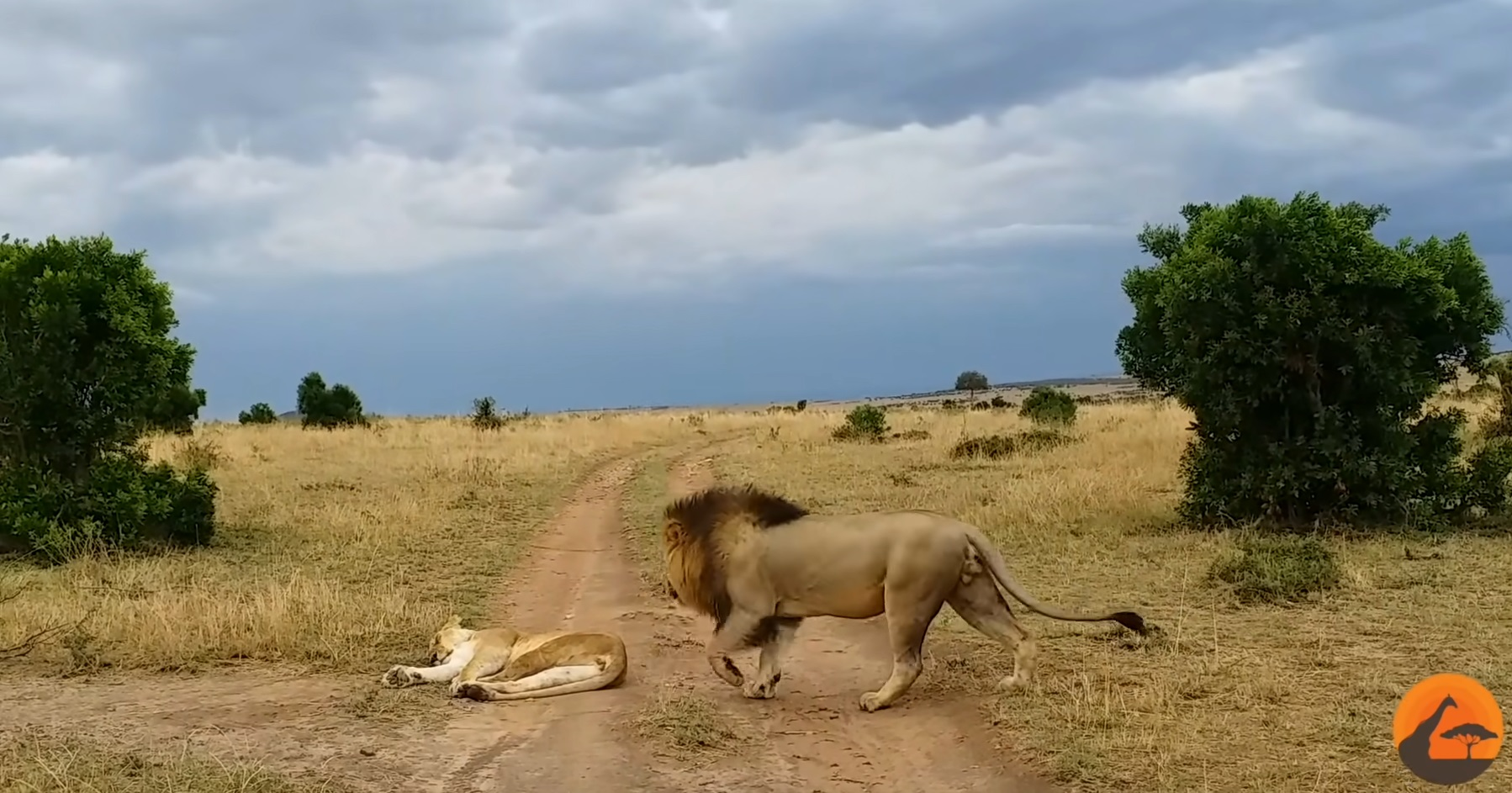 How To Not Wake Up A Lioness
