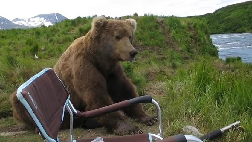 Bear Sits Next To Guy Fishing