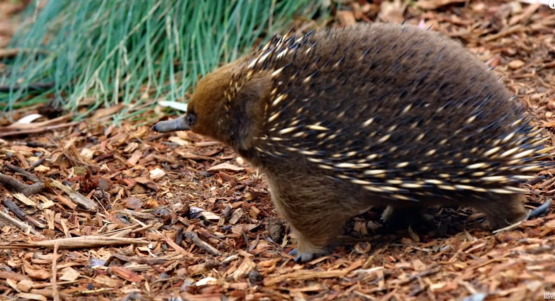 What In The World Is An Echidna ?