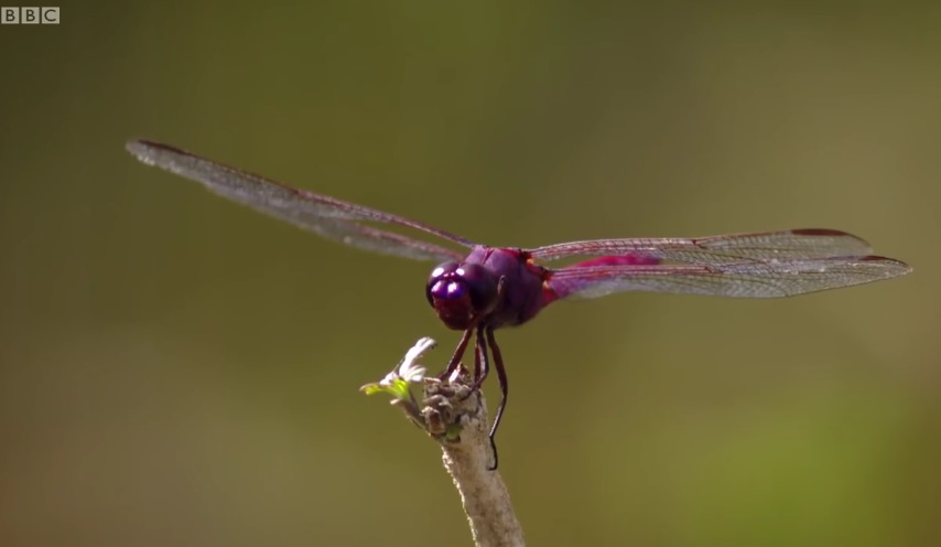 How Dragonflies See The World ?