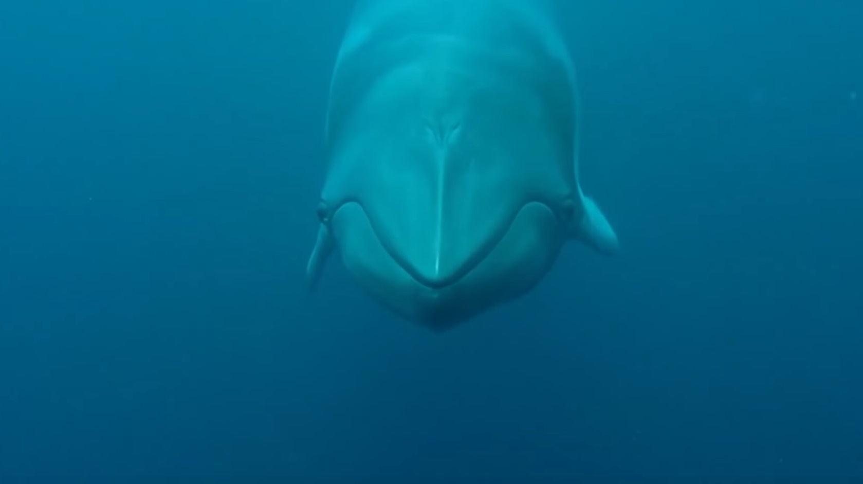 The Whales Of The Great Barrier Reef