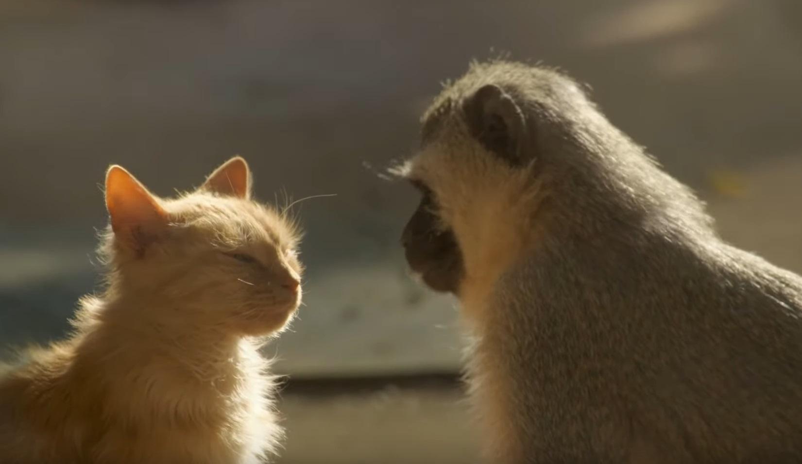 Unusual Animal Interspecies Friendships