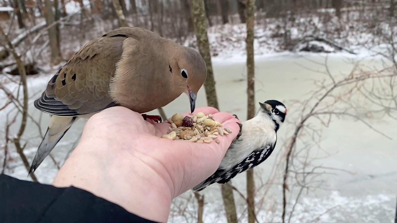 Hand-feeding Birds In Slow Motion