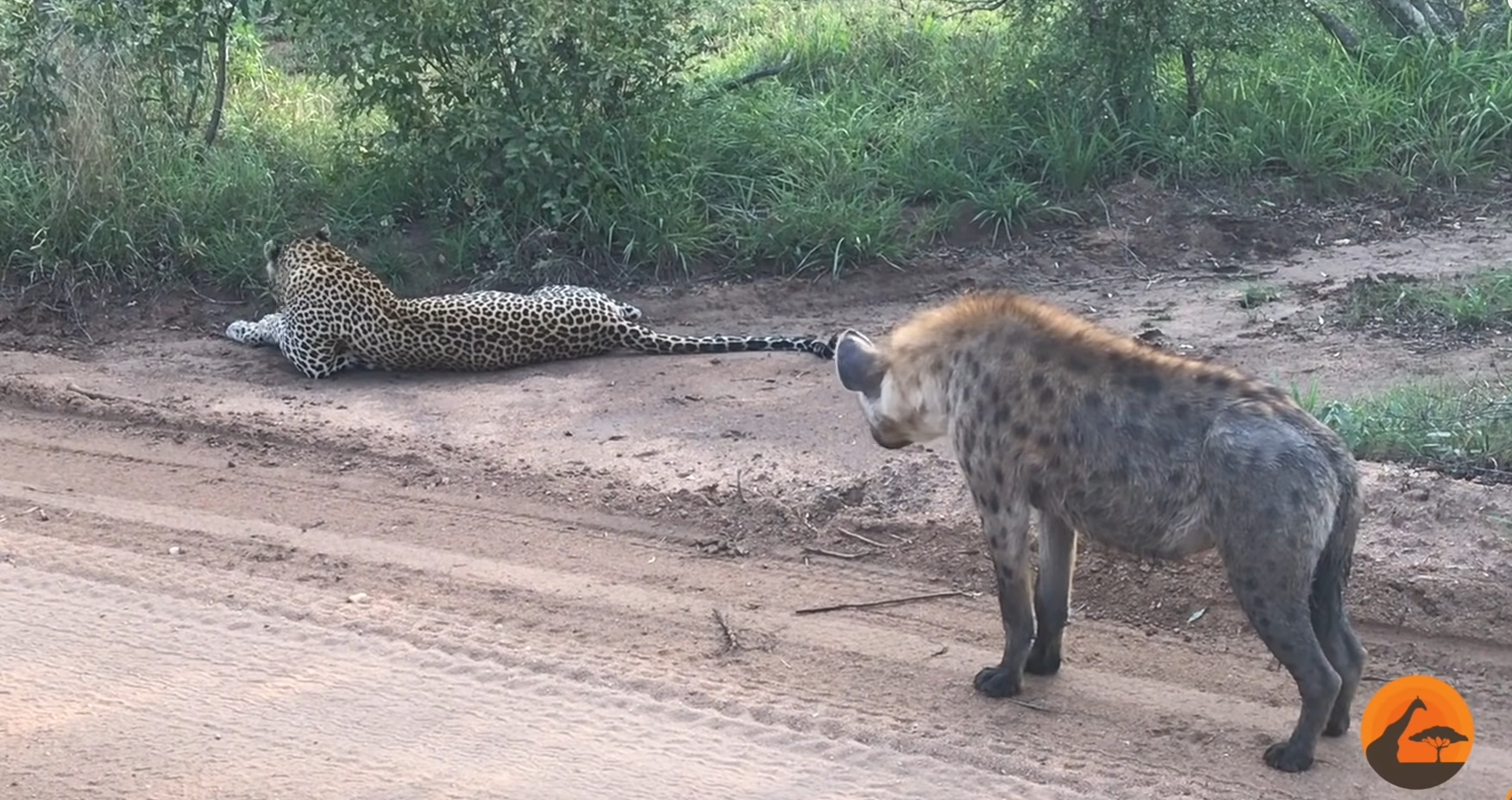 Hyena Gives Leopard A Scare