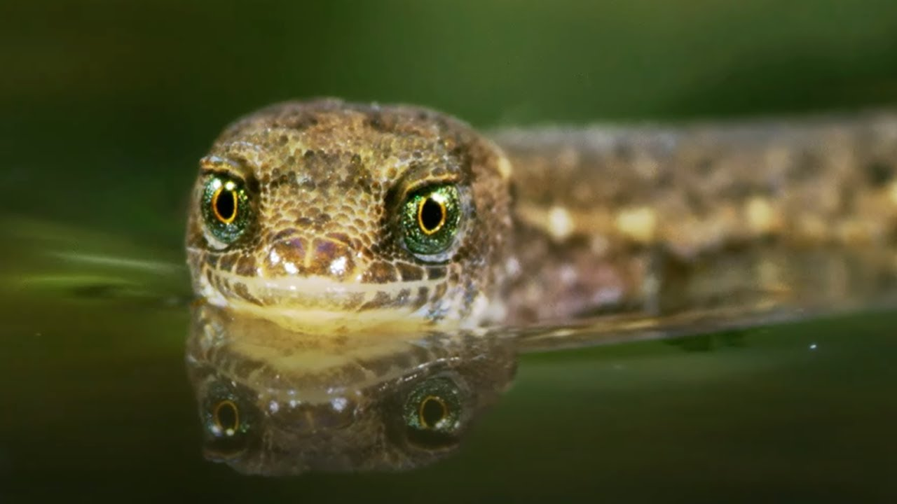 The Unsinkable Lizard