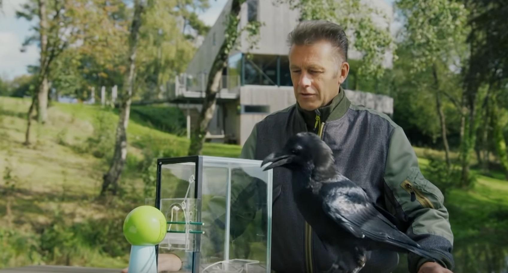 Raven Solves Puzzle