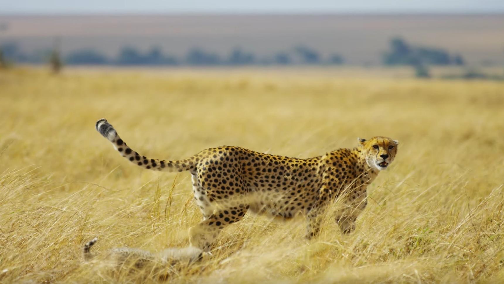 Wild African Animals Safari
