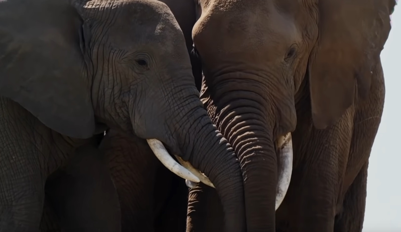 Animals And Empathy