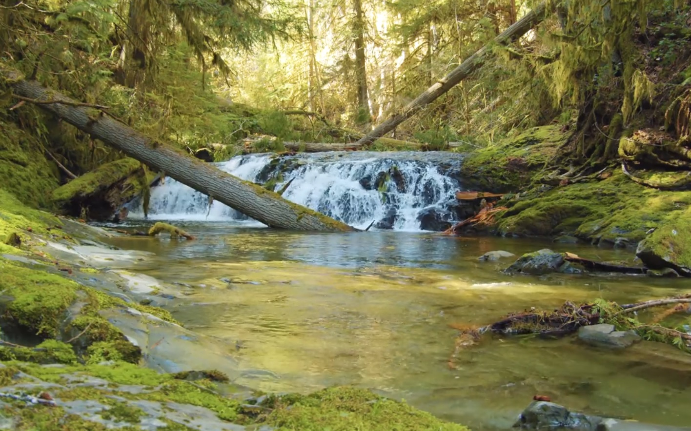 Relaxing Momens In Canadian Nature