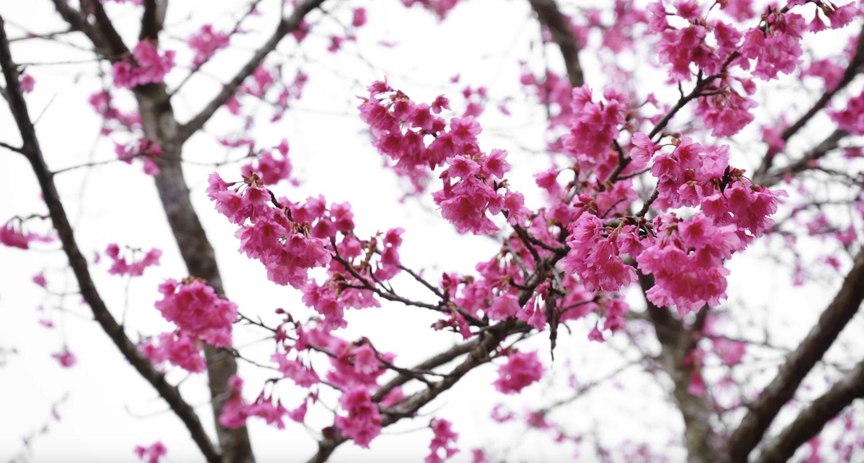 Beautiful Flowers Compilation