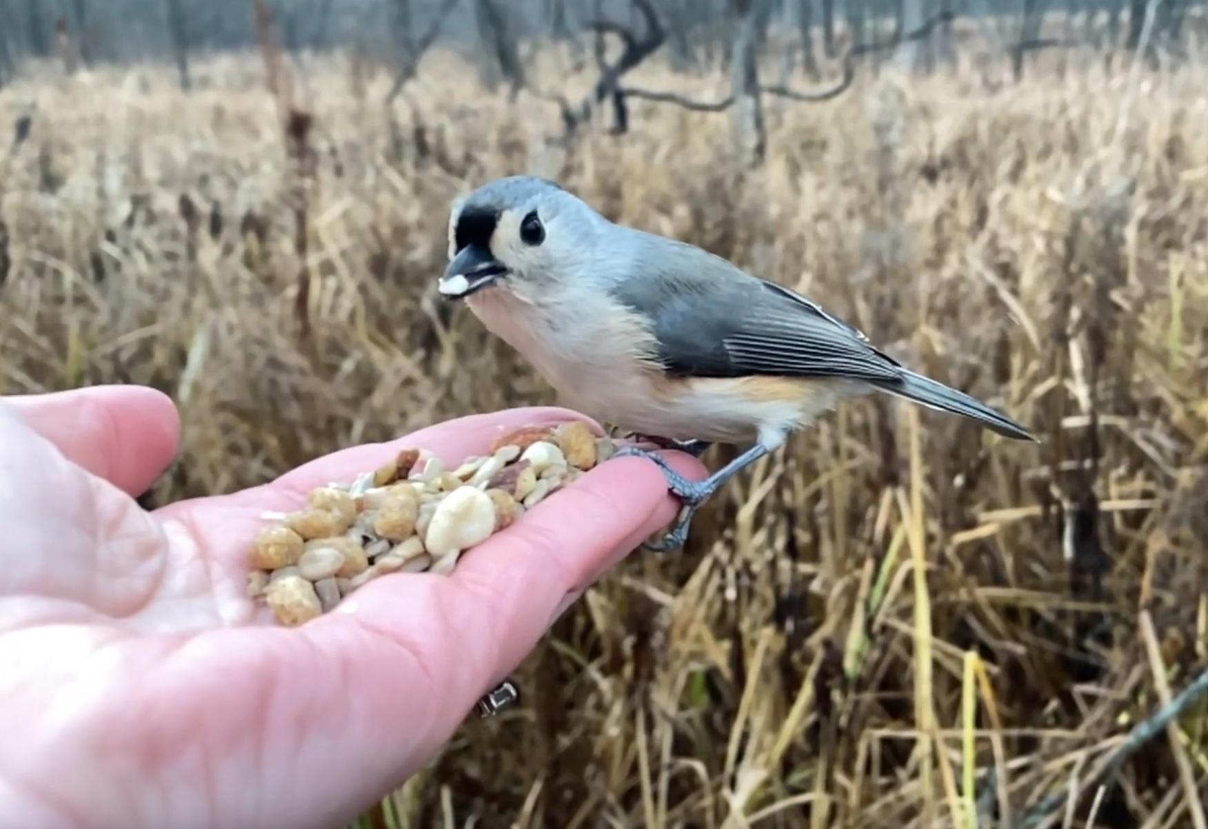 Hand Feeding Beautiful Bird