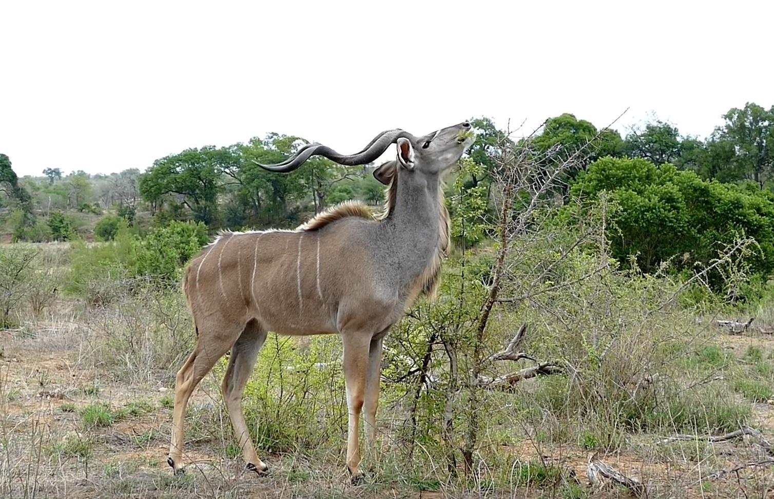 Kruger Wildlife Sightings
