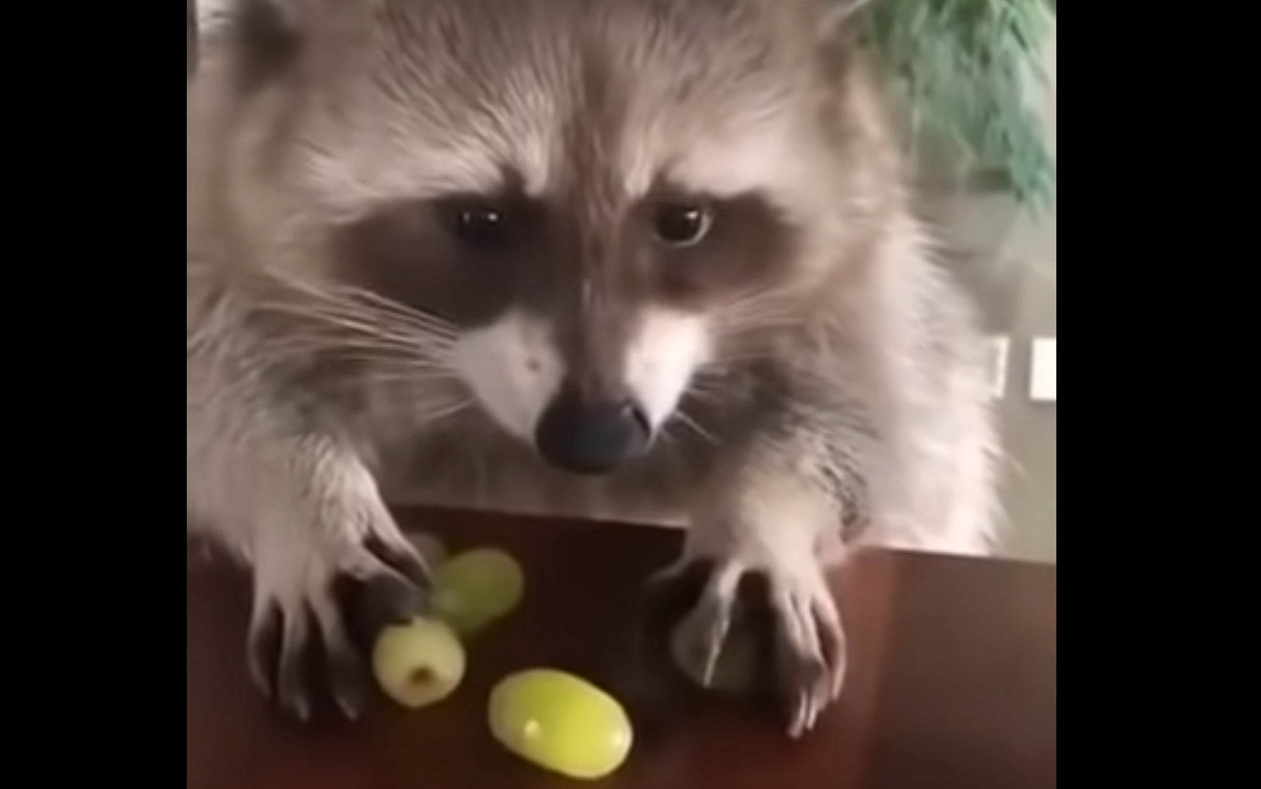 Don't touch my grapes