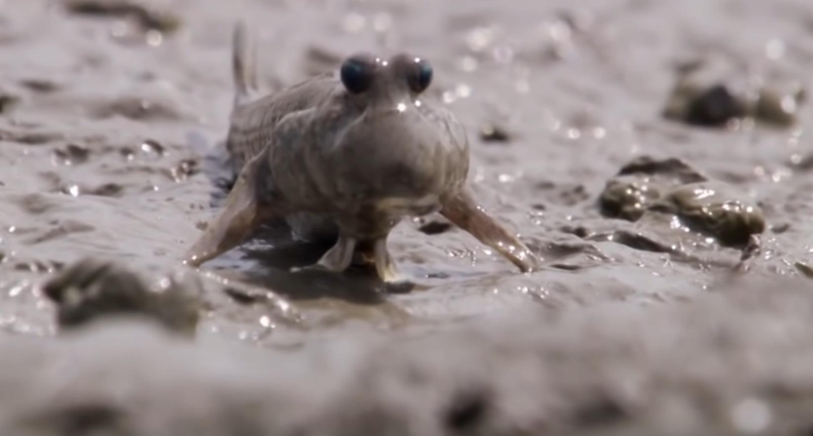 Aquatic Animals Take To Land Compilation