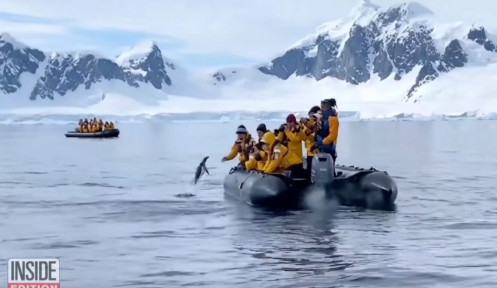 Penguin Tries To Jump In Boat While Chased By Killer Whales