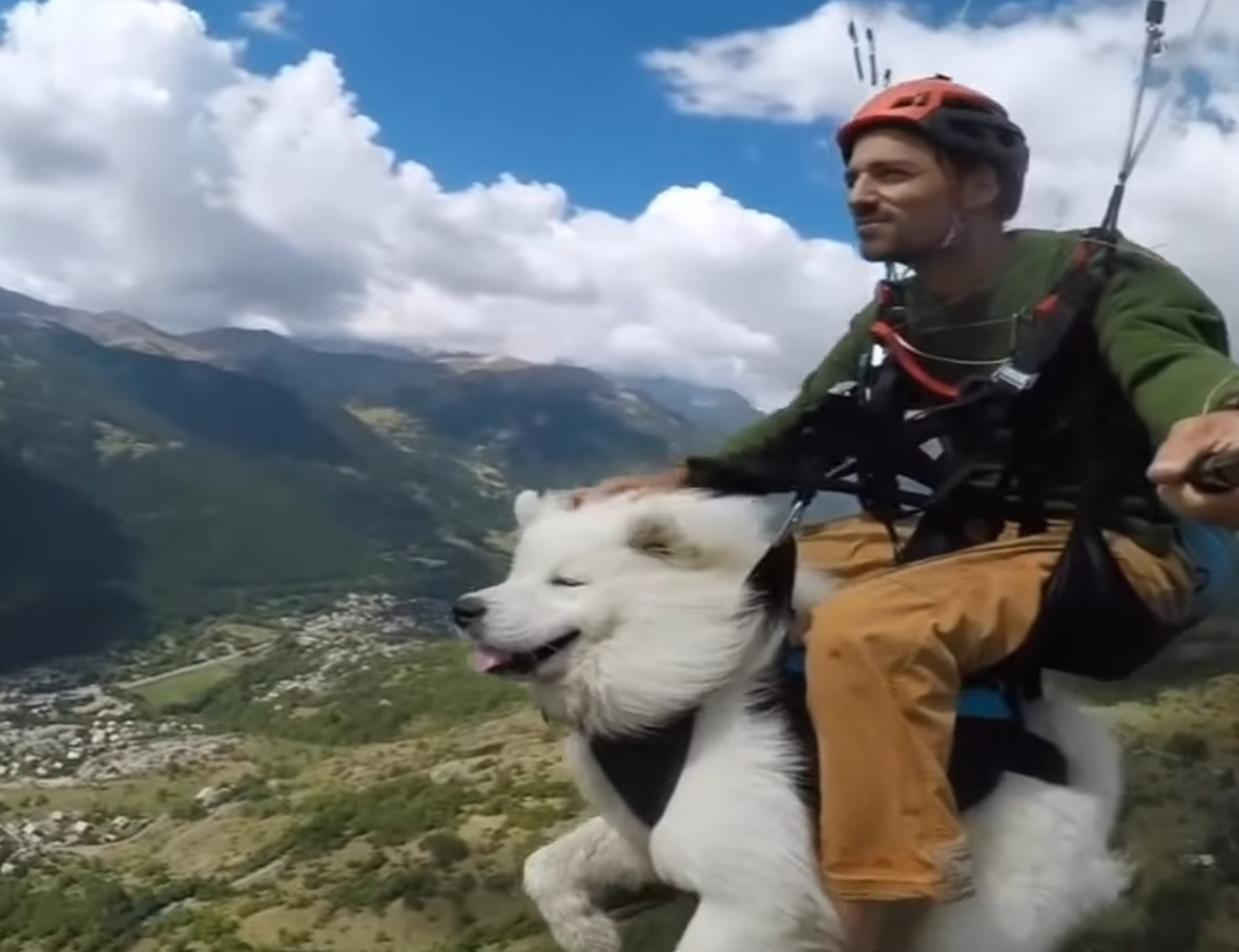 Dog Goes Paragliding With Hooman