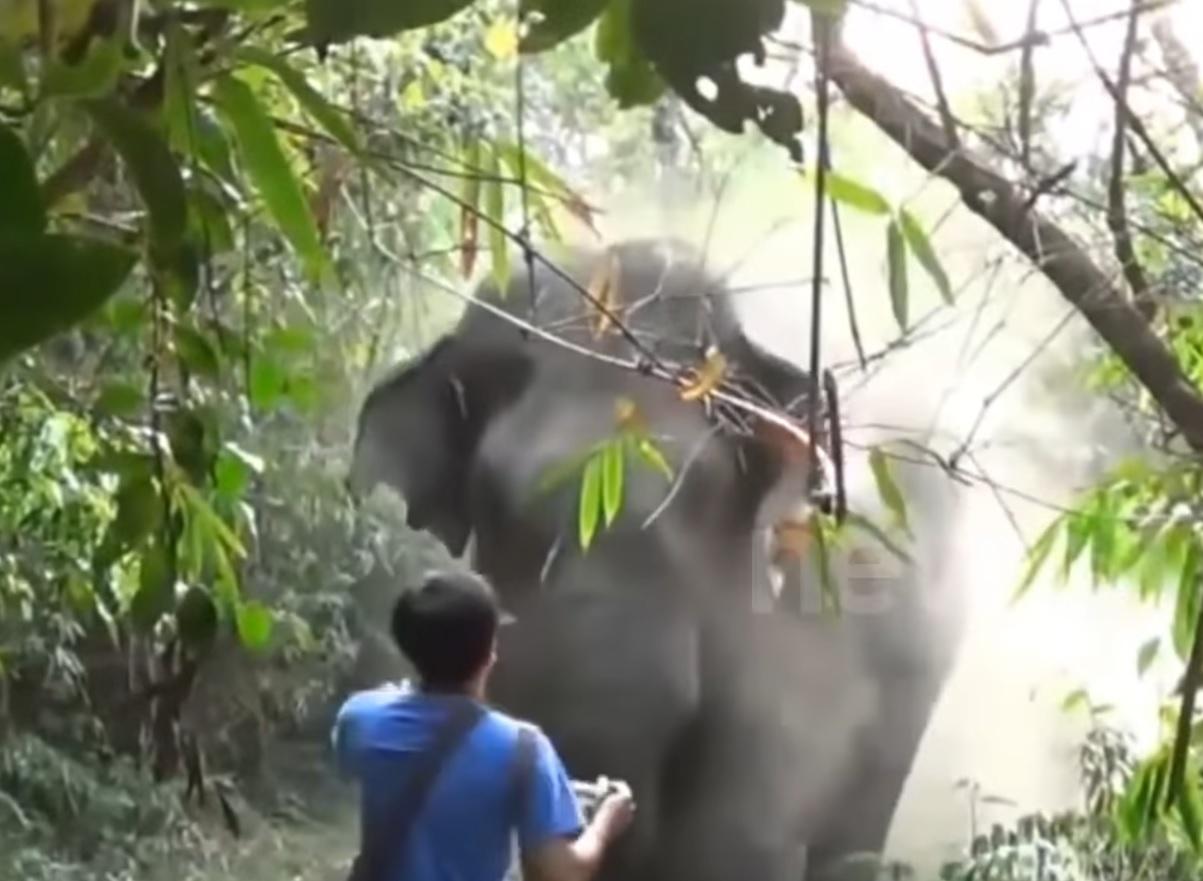 Lucky Man Halts Charging Elephant