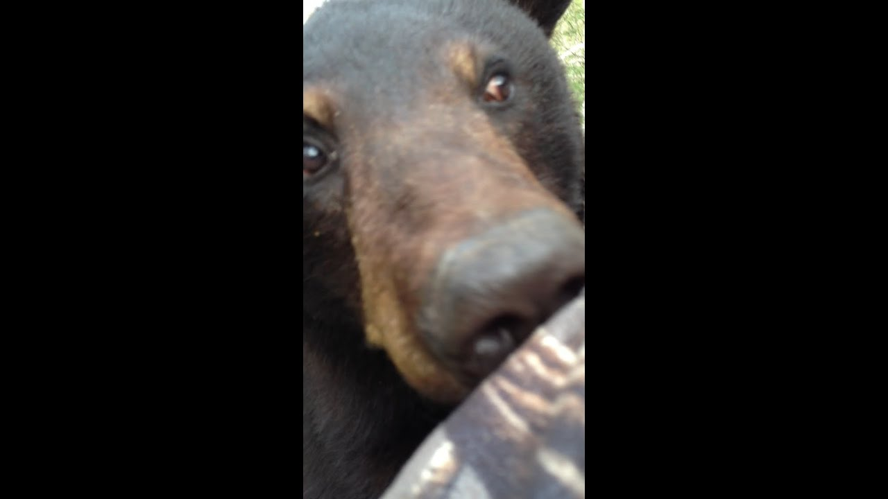 Man Face To Face With Bear